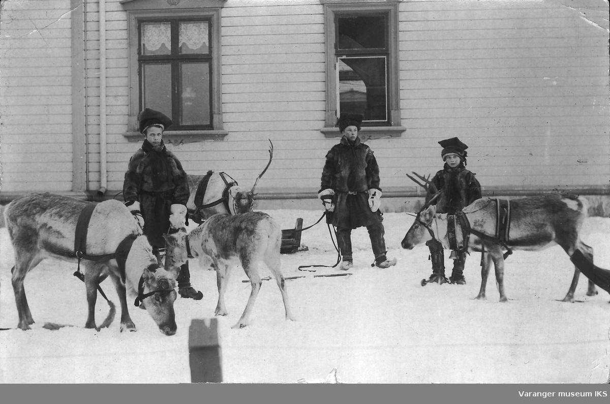 Amtmannens barn Valborg, Ragnvalg og Truls med reinsdyr utenfor Amtmannsgården 1902.