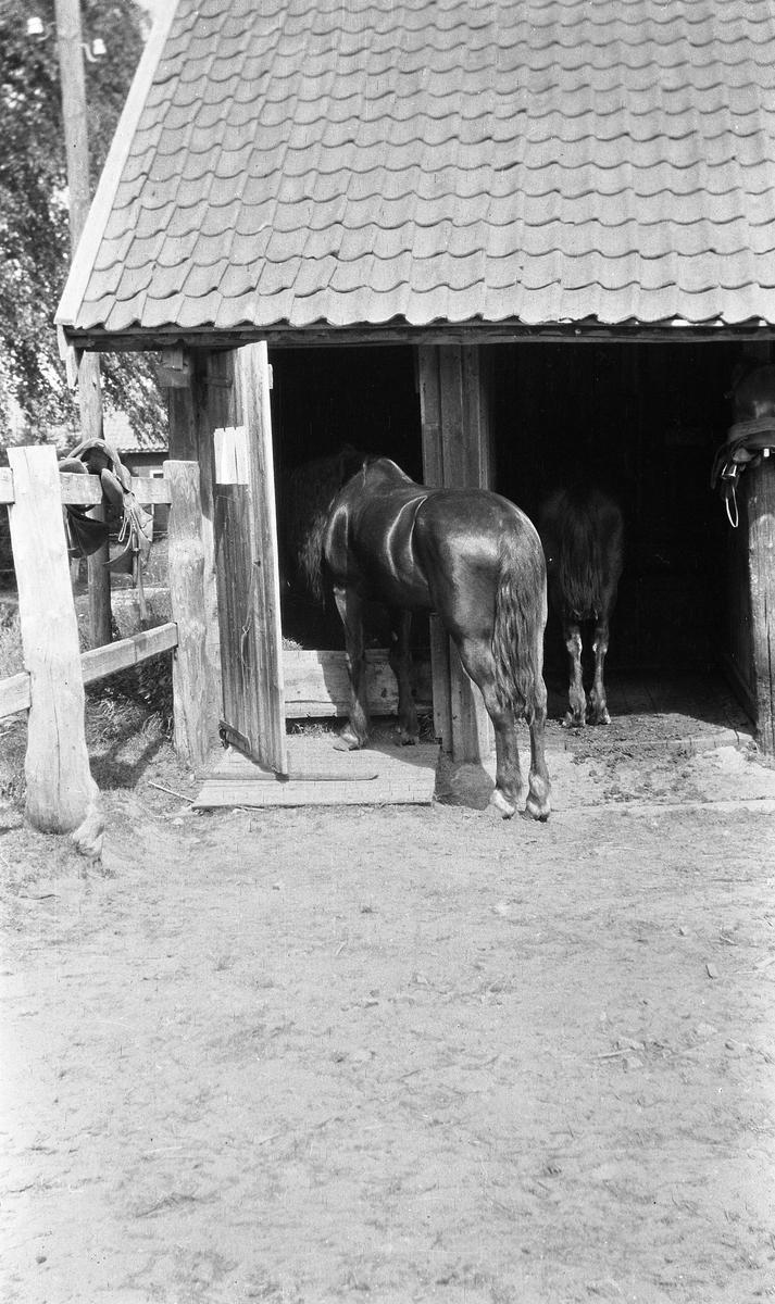 Hest ved liten stall. Trolig på Gardermoen.