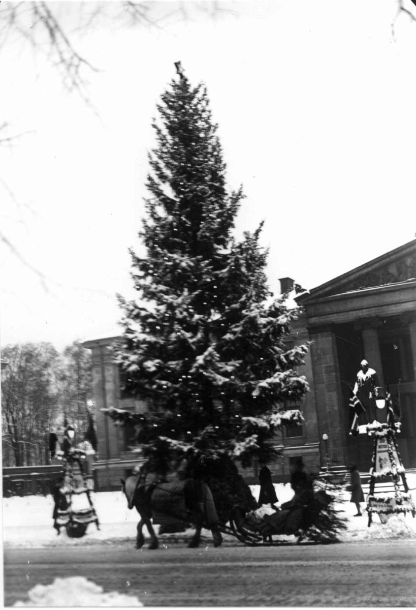 Oslo. Juletreet på Universitetsplassen. 1930. Hest og slede i forgrunnen. Fotgjengere. Statuer og Universitetet i bakgrunnen.