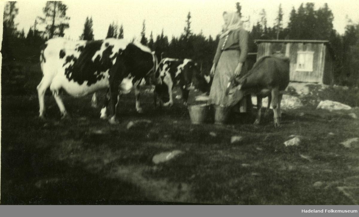 Marte Hanserud omgitt av melkeku og ungdyr foran uthus i Hanserud søndre.