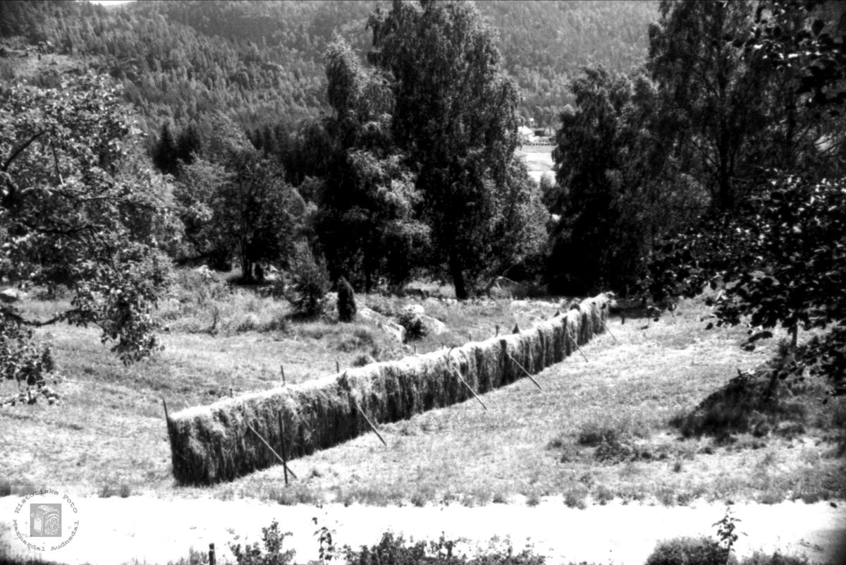 Hesjing på en gård på Breilid, Bjelland.