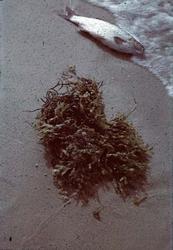 Död fisk på strand