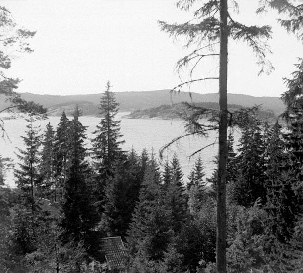 (Stereo karta XIX) Utsikt nära Vindön västerut. 30 Juni 1929.