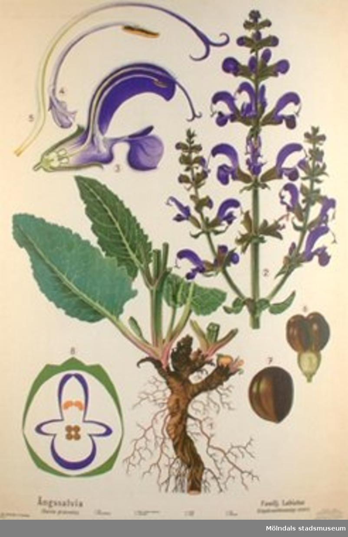 :1: Snödroppe.:2: Kabbeleka.:3: Lundviva.:4: Ängskrasse.:5: Maskros.:6: Ängssalvia.:7: Bergsnejlika.:8: Ängsklocka.:9: Vallmo.:10: Vicker.:11: Hassel.:12: Träjon.:13: Medicinalväxter 1.:14: Medicinalväxter 2.