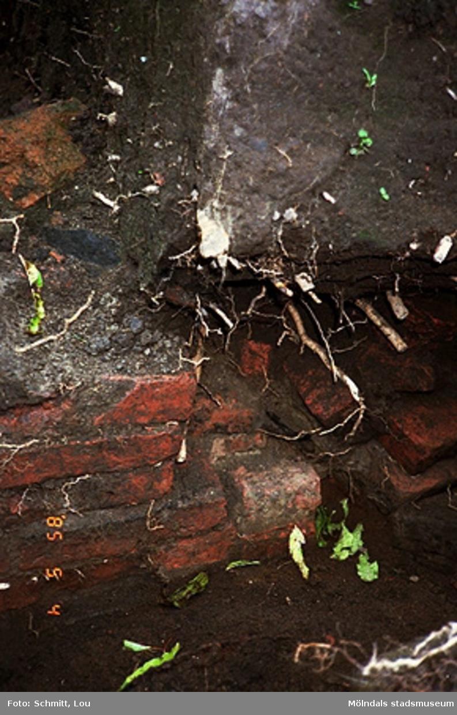 """Drivhus """"B"""". Fotodokumentation av Gunnebo slott, september-oktober 1995."""