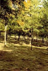 En skog, som ligger i Fagered.