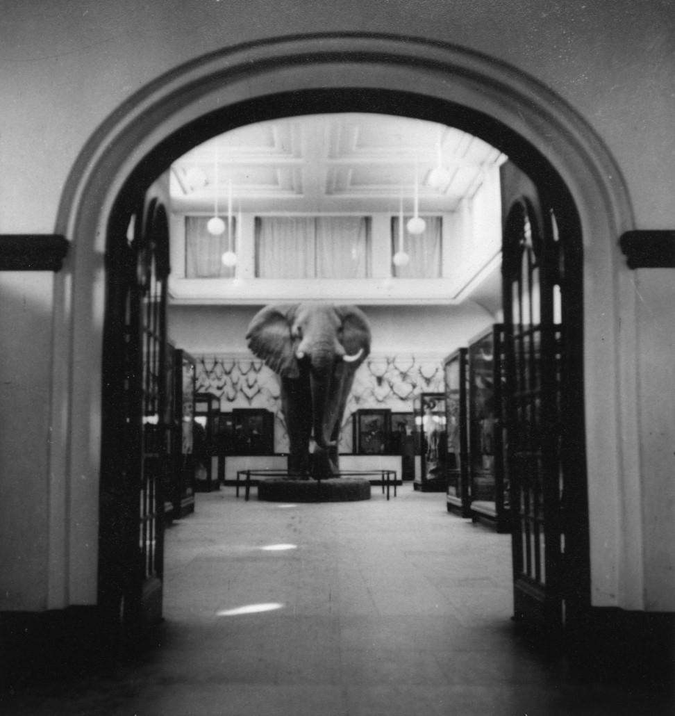 'Den monterade elefanten i däggdjurssalen. ::  :: Fotograferad från avstånd, in genom dörrarna ledande till däggdjurssalen.'