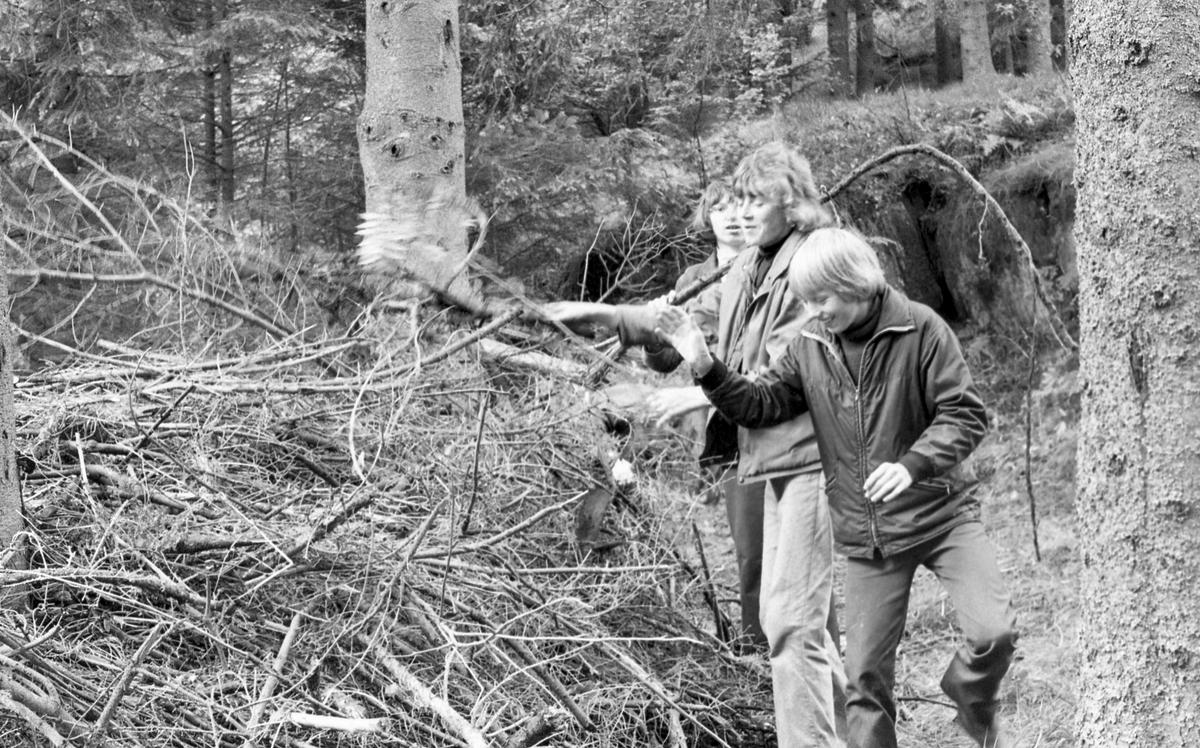 Skogrydding. En skoleklasse rydder vekk greiner og annet nedfallstrevirke i Djupadalen.