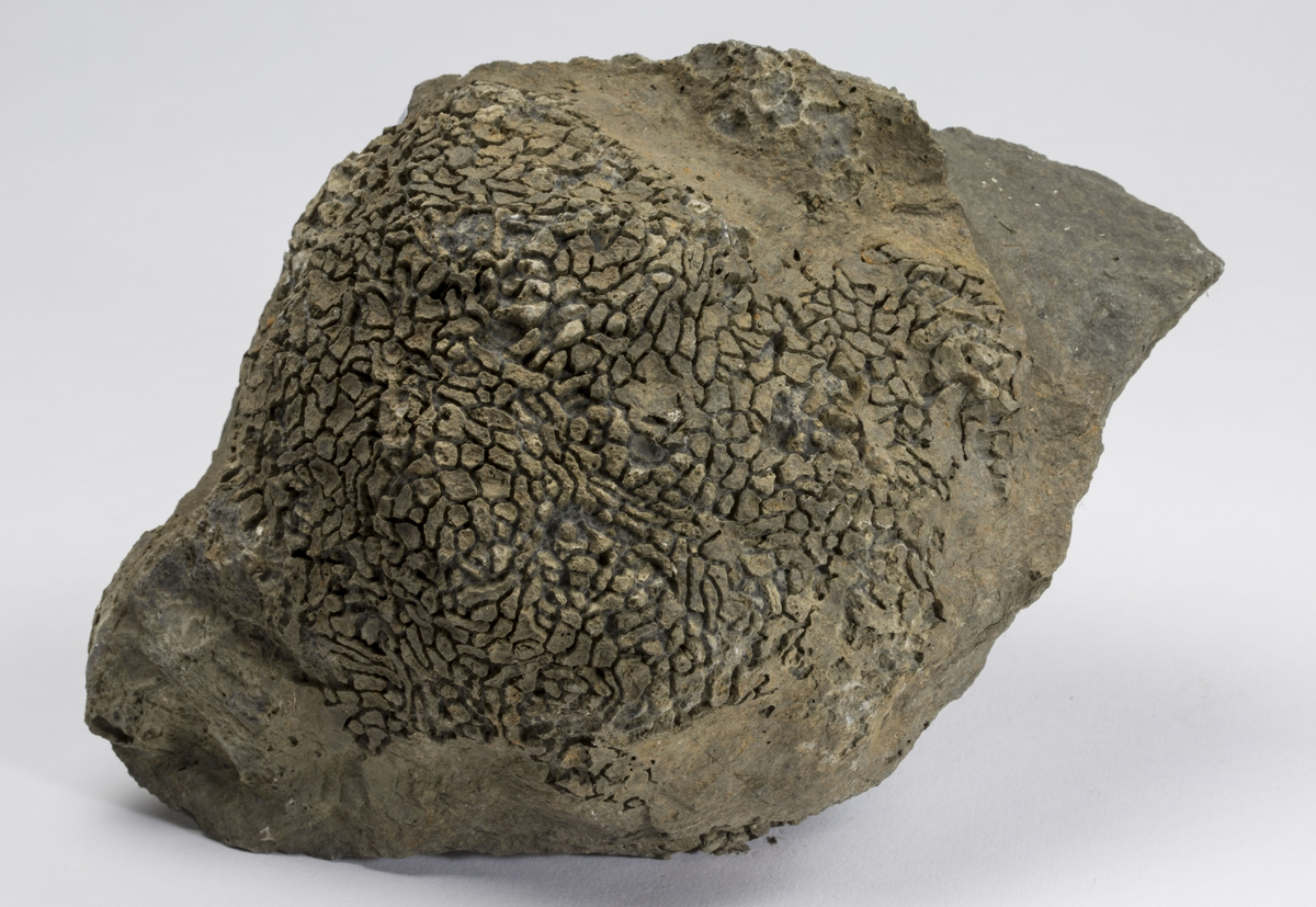 Fossil SVAMP