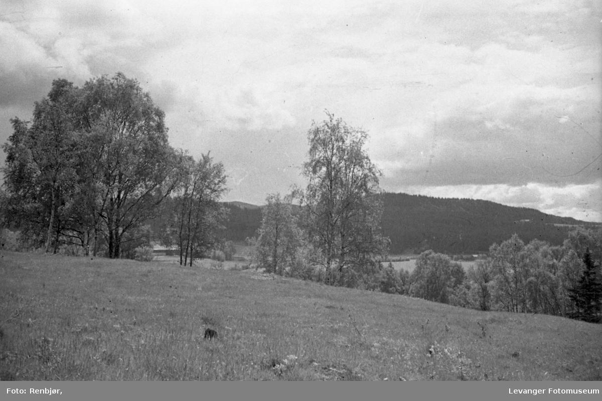 Landskap fra Lillemarksbakkene. Halsanområdet i bakgrunnen.