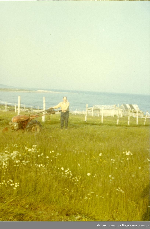 Arnulf Bauna slår høy nedenfor huset med tohjulstraktor. Bak ses sauefjøsen til Edvin Bietilæ. Skallelv, 1960-tallet.