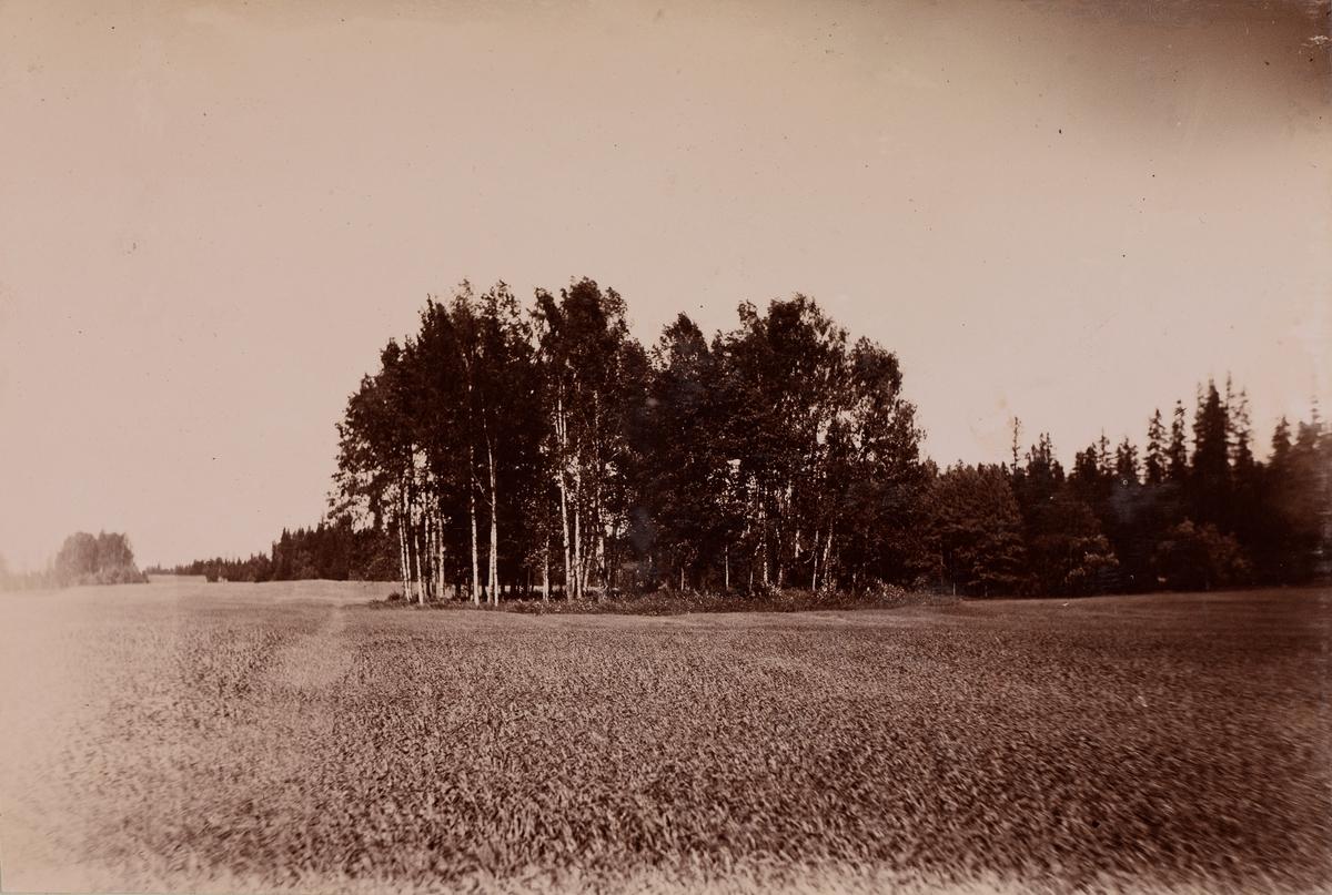 Et åkerlandskap med en klynge med trær.