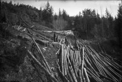 """Fotosamling etter Hans Tveito. """"Skogshost ca. 1921-22"""""""