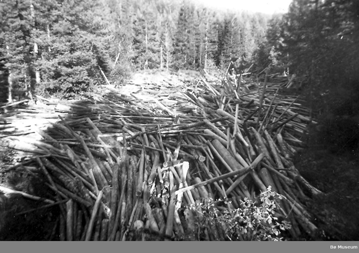 Haug i Bakkjerkromla 1958