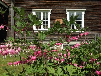 Blomster i Storbråtenhagen (Foto/Photo)