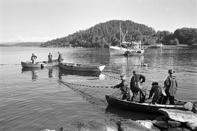Fishermen aT Hvervenbukta near Oslo, 1961