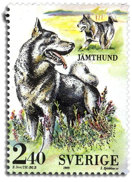 Jämthund