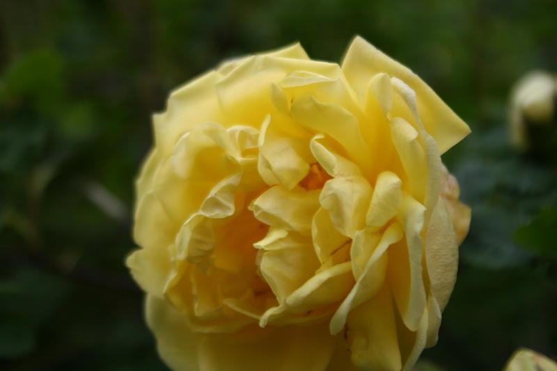 blomster_026.JPG