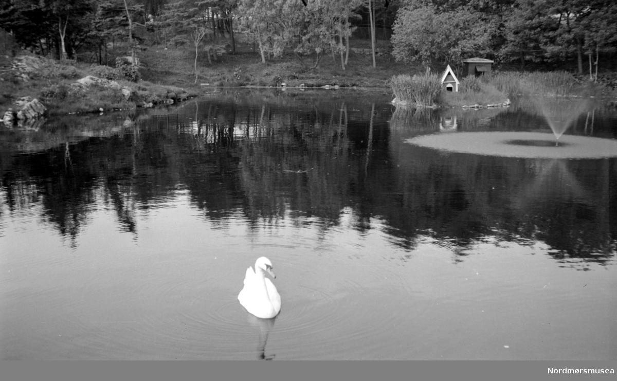 Bilde fra Svanedammen. Den minste av 4 dammer som utgjør Vanndamman på Kirkelandet i kristiansund. Fra Nordmøre Museum sin fotosamling. Duplikat?