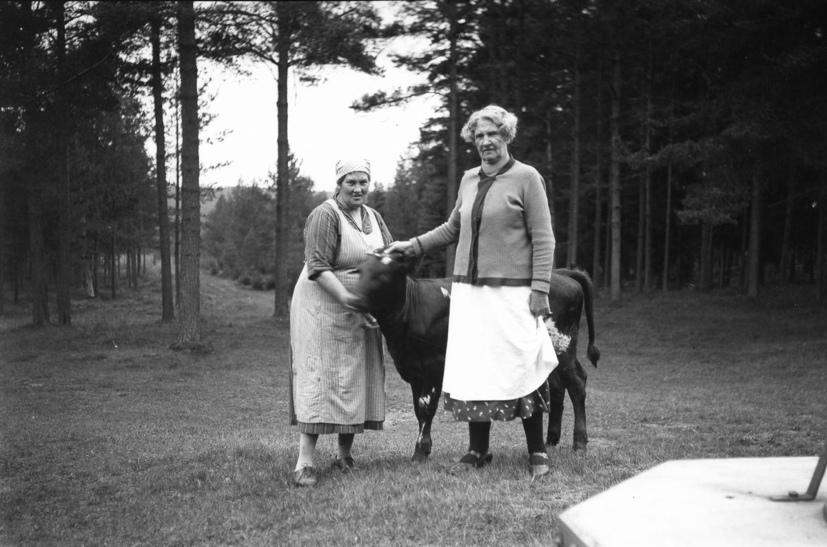 Två kvinnor med en kalv i Storvik.