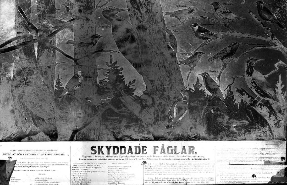 Skyddade fåglar (dåligt skick). Reproduktion av KJ Österberg.