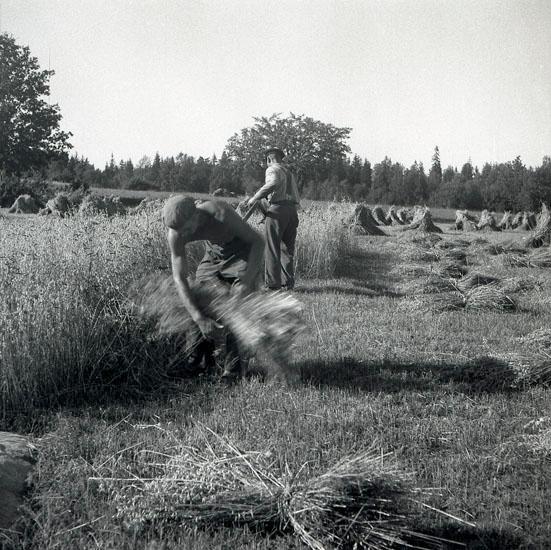 Gustaf Erik Elmlund - Offentliga medlemsfoton och - Ancestry