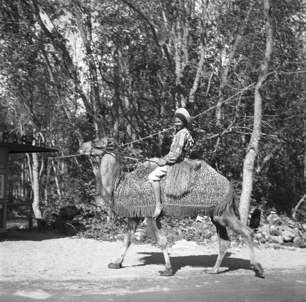 Furuvik. Kamel