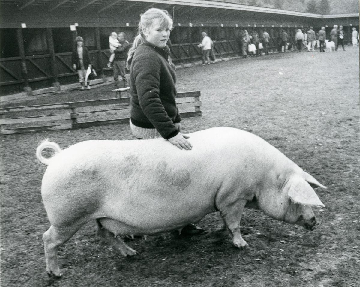Ann Sophie Myklebust med grisen 1278 Mykle.