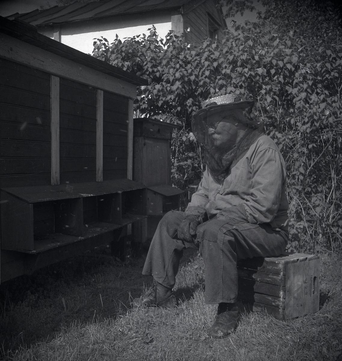 En man sitter på en låda framför en lång bikupa iförd skyddshatt med nät och handskar. Mickelsson har tagit fotot för exponering i en tidning om biodling 1948.