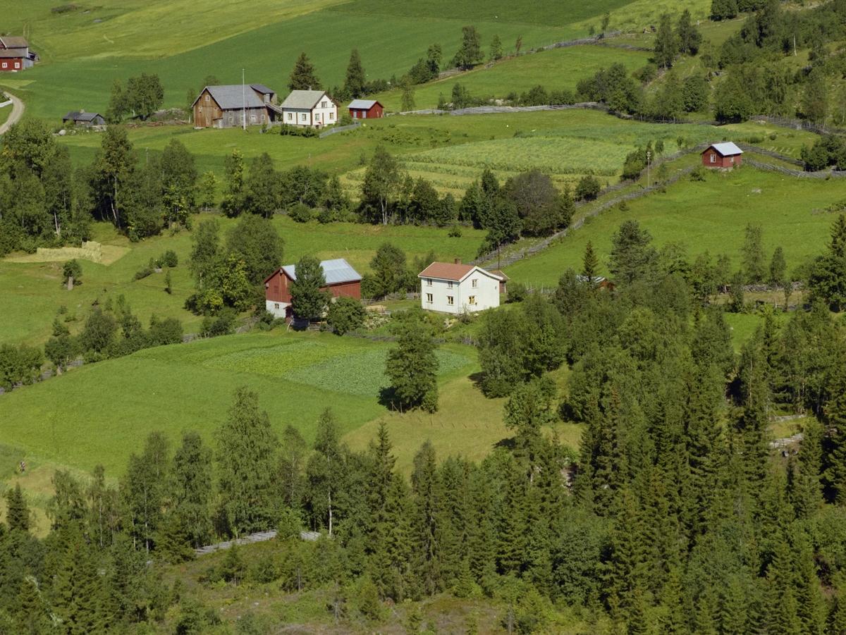 Rønningen nedre, Nyhus bak t.v. Kulturlandskap med dyrka mark. Åkrer atskilt med trær og busker. Hvit bygning og rødt uthus.
