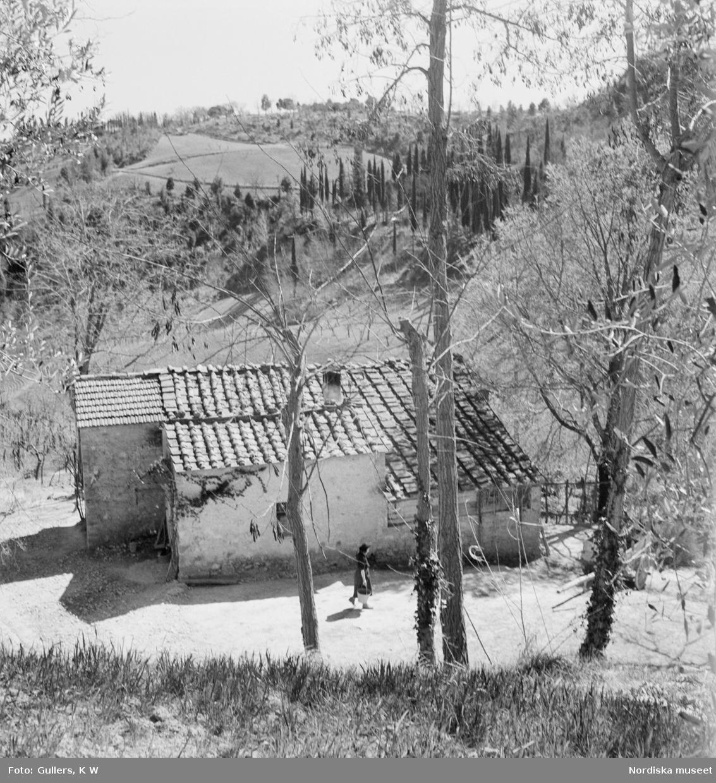 I förgrunden rader av vinstockar i bakgrunden en bergssluttning med en slingrande väg och två hus överst på toppen.