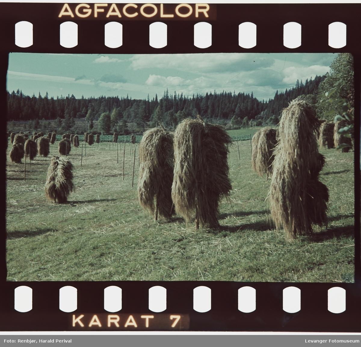 Landskap med kornstaur.