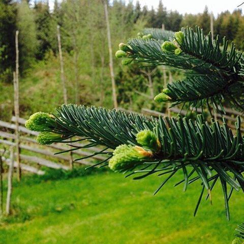 """Julivinner i fotokonkurransen """"Det fantastiske treet"""""""