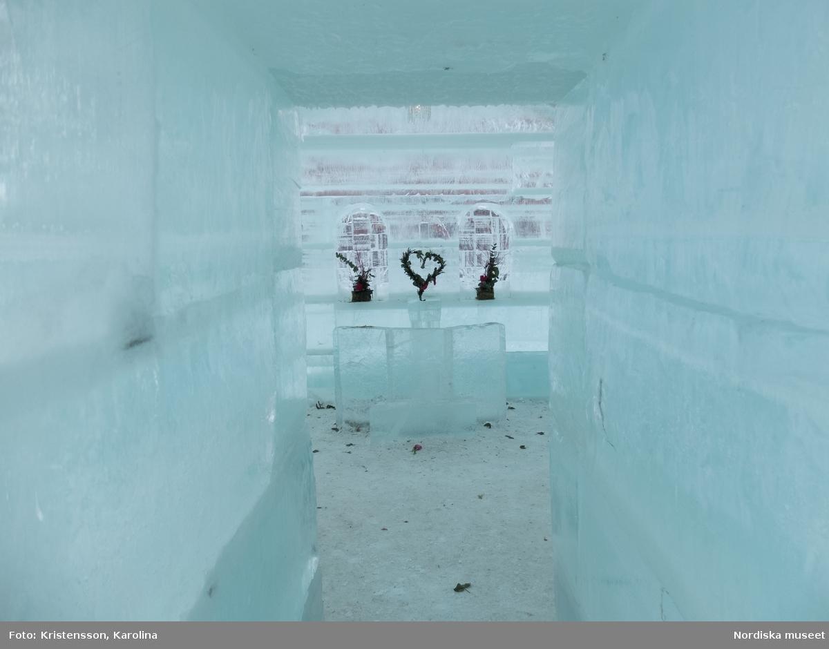 Vilhelmina iskyrka, Arktis