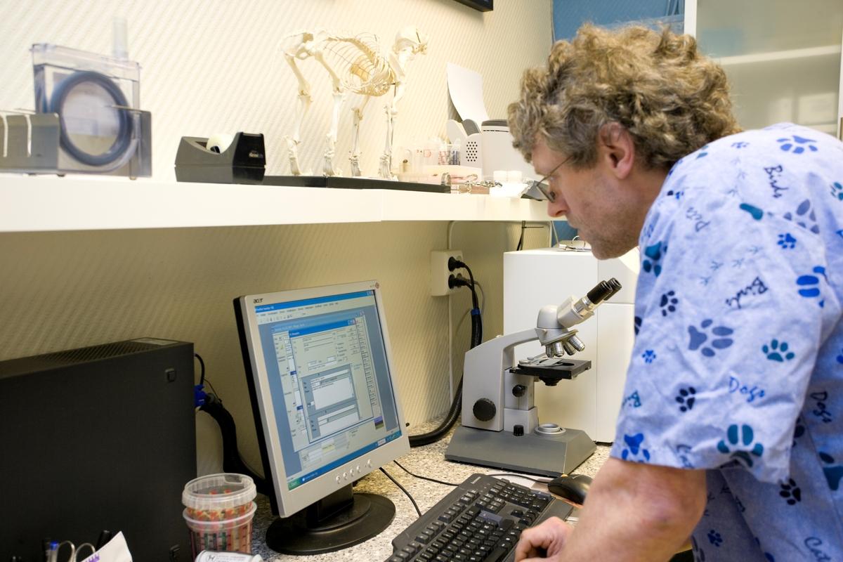 Hund hos veterinær. Veterinæren taster inn data om hunden i forbindelse med konsultasjonen.