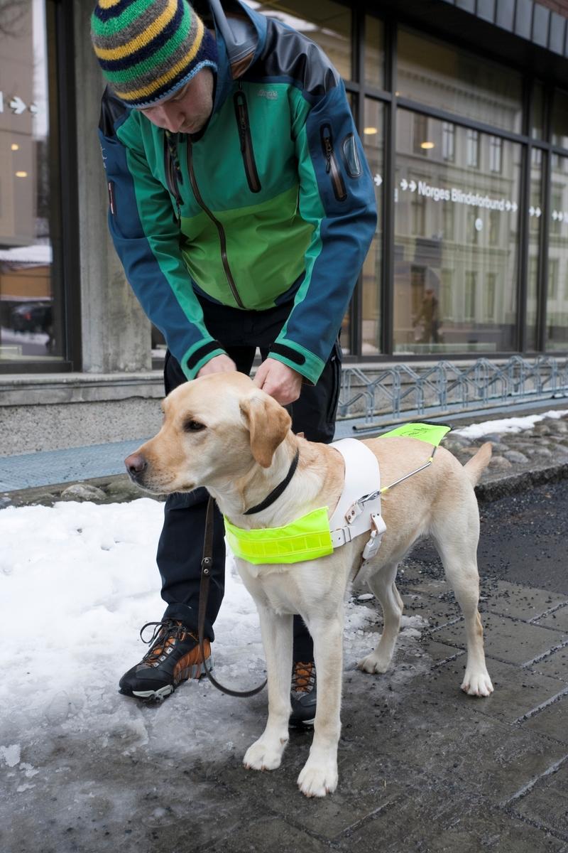Førerhundskole. Førerhund på treningstur med førerhundtrener i området Majorstuen i Oslo
