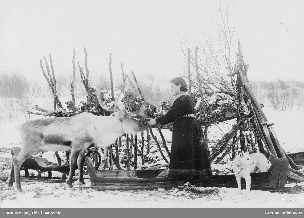 En koftekledt Ellisif Wessel mater kjørereinen ved mosekraken ved Solheim, vinteren 1896.