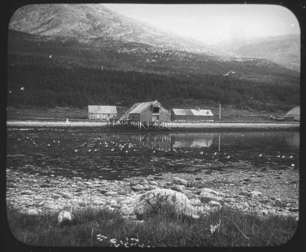 """""""Troms fylke. Serie 111. No. 15"""" står det på glassplaten. Med svak skrift kan man også skimte at det står Kvænangfjord. Bildet viser et fiskebruk med kaianlegg for mottak av fisk og ligger et sted langs Kvænangsfjorden. Kvænangsfjorden ligger i Kvænangen kommune (nordsamisk: Návuona suohkan, kvensk: Naavuonon komuuni) ligger i Troms. Den grenser mot Loppa i nord, Alta i øst, Kautokeino i sør, Nordreisa i sørvest, og Skjervøy i vest. Kvænangen hører til regionen Nord-Troms.Navnet Kvænangen antas å komme av kvæn (kvener) som er norsk for «finsktalende folk», og angr som er norrønt for «fjord». Det samiske navnet Návuotna antas å være forbundet med stedsnavnene Návet og Návetvuopmi (norsk: Navetdalen) – návet betyr """"fjøs"""" og vuotna betyr """"fjord"""".  Nye opplysninger vi har fått om bildet: Bildet er fra Alteidet i Kvænangen. Bygningene tilhørte handelsstedet, notbrygga, med nothjellen bak og til høyre skimter man litt av storbåt-naustet. Vår kontakt mener at bildet er tatt av Hanna Resvoll-Holmsen. 1873 - 1943. Botaniker, vitenskapskvinne, fotograf. Datering ca 1910."""