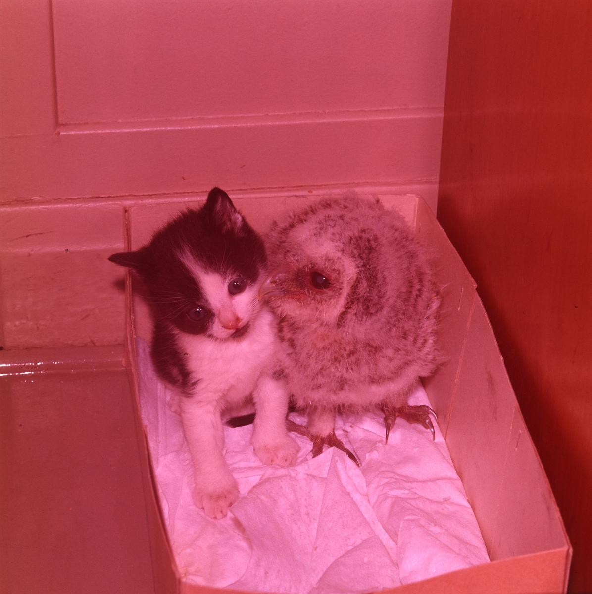 Två vänner, en kattunge och en uggleunge sitter tillsammans i en låda av kartong.