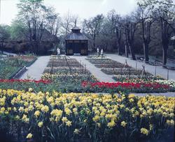 Blommande vårblommor i Rosenträdgårdens välskötta rabatter.