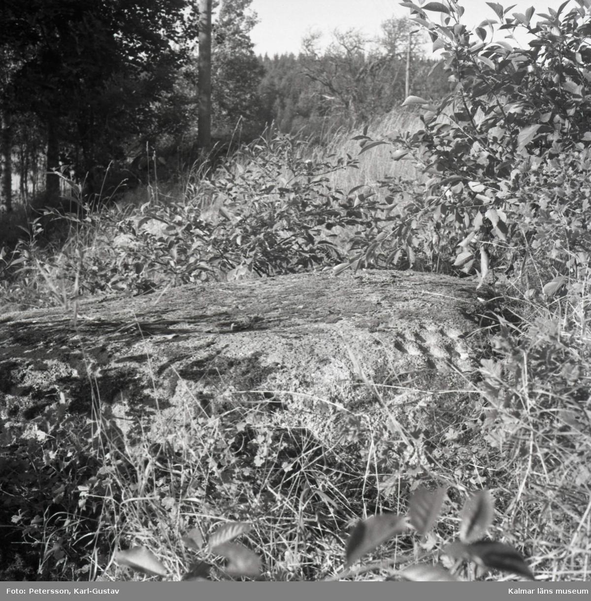 Älvkvarnsstenen. Skålgroparna, eller älvkvarnarna, syns till höger på stenen.  Foto KG Petersson 5/9 -1958.