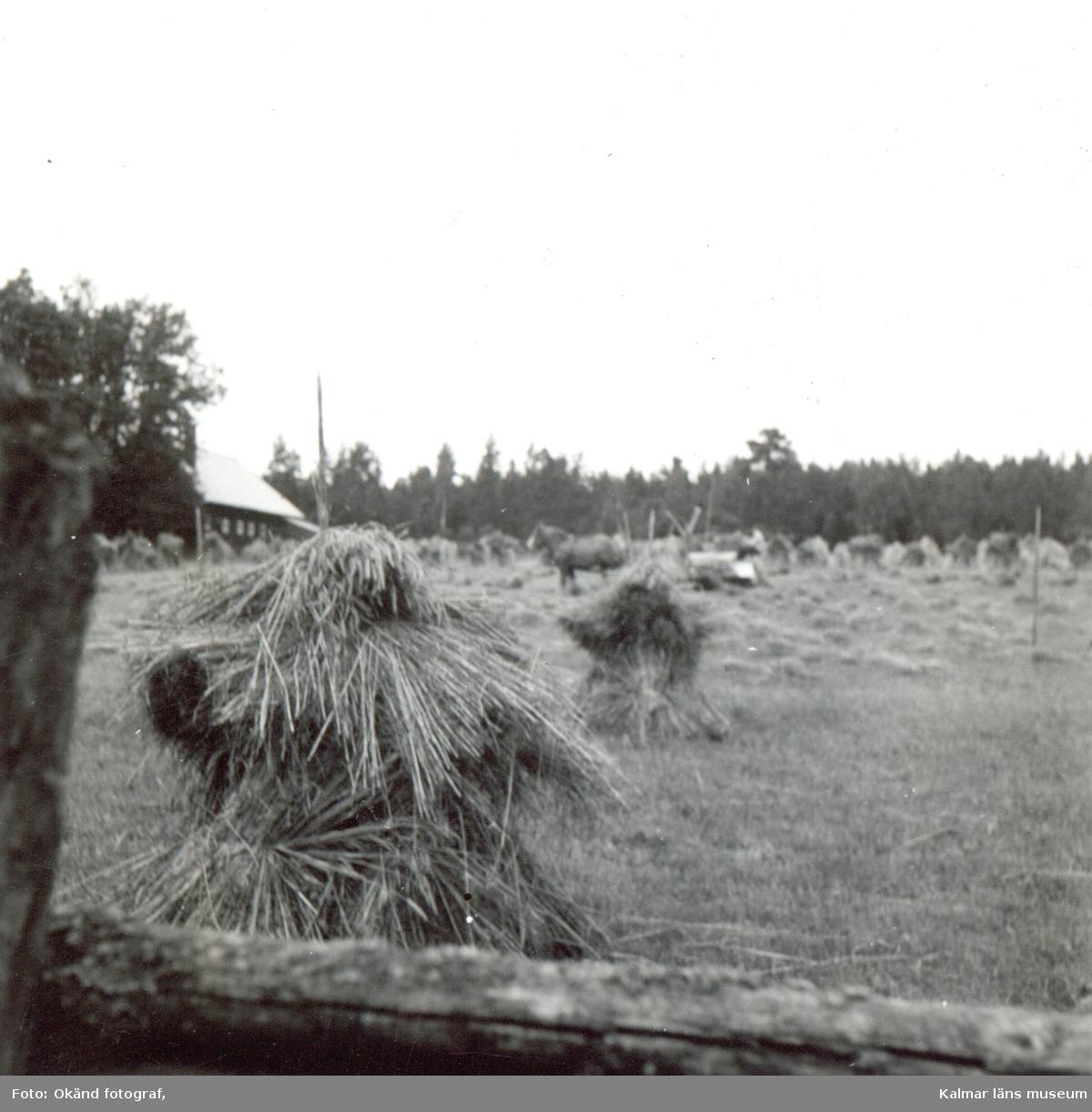 Skördebild 1952 ifrån Mjödehult.
