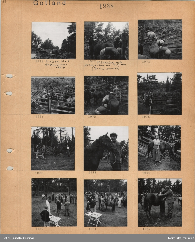 Motiv: Gotland, Lojsta hed, gotlandsruss, två unga kvinnor sitter i en tvåhjulig vagn dragen av en liten häst, märkning och premiering av hästar (gotlandsruss), en man håller i huvudet på en häst, två män undersöker den, gärdesgård av trä, hästar i fållor, arbetsklädda män, åskådare, två män står vid ett bord och studerar en häst hållen av en kvinna, en arbetsklädd man håller en häst i grimman, ung kvinna håller i repet till en häst, bedömare och publik i en hage med barrträd i bakgrunden, en man bedömer en häst som hålls av en ung kvinna.
