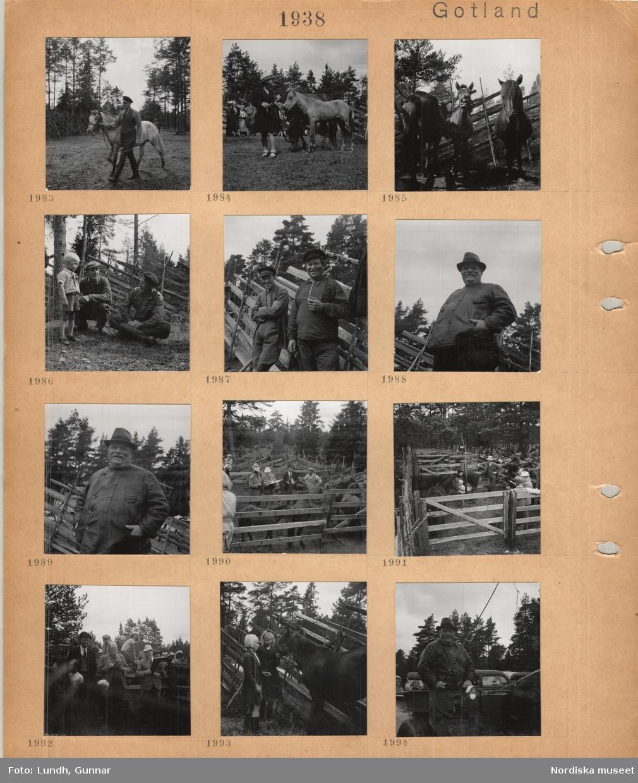 Motiv: Gotland, Lojsta hed, gotlandsruss, hästhage, man i ridklädsel leder en ljus häst i tygeln, en liten flicka med en betande häst med föl, tre hästar står vid en gärdesgård av trä, två arbetsklädda män och liten pojke i kortbyxor, ridklädd man och arbetsklädd man med pipa framför gärdesgård, äldre man i kort jacka och hatt, hästar i en fålla bedöms av män med papper i händerna, två flickor klappar en häst, äldre man på kuskbock med en lång piska i handen.