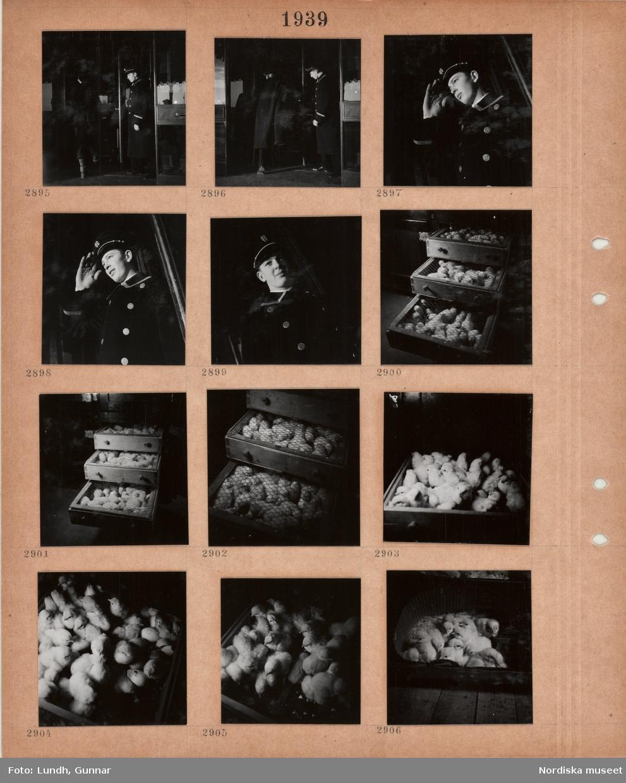 Motiv: En man i lång uniformsrock och skärmmössa, dörrvakt, står vid en ytterdörr, svängdörr(?), honnör, kycklinguppfödning, låga lådor med nät över fulla med kycklingar.