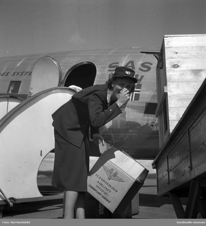 En ovanlig flygpassagerare har checkat in på ett SAS-plan på Midlanda. En järv ska uppenbarligen transporteras någonstans och av flygvärdinnans min att döma så doftar det inte speciellt behagligt om djuret.