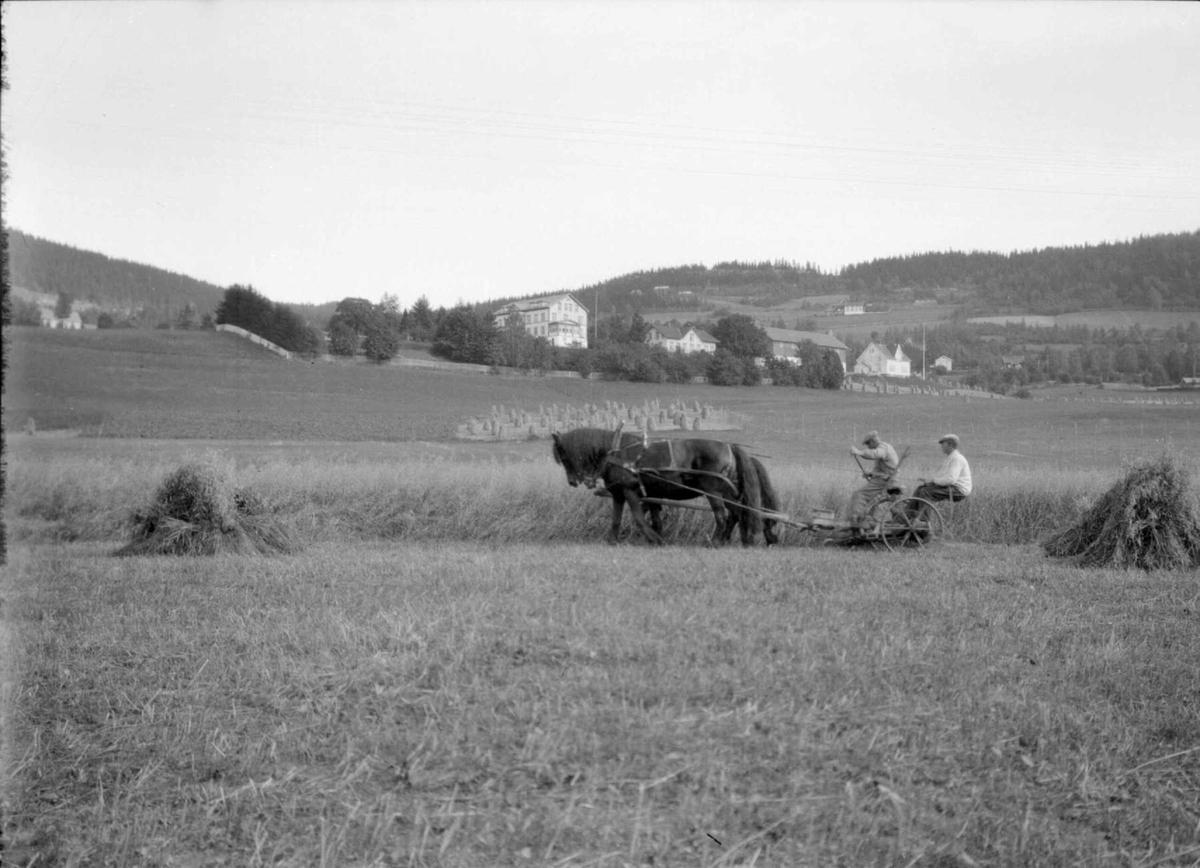 Skuronn på Hoelsjordet. Holen gård i bakgrunnen.