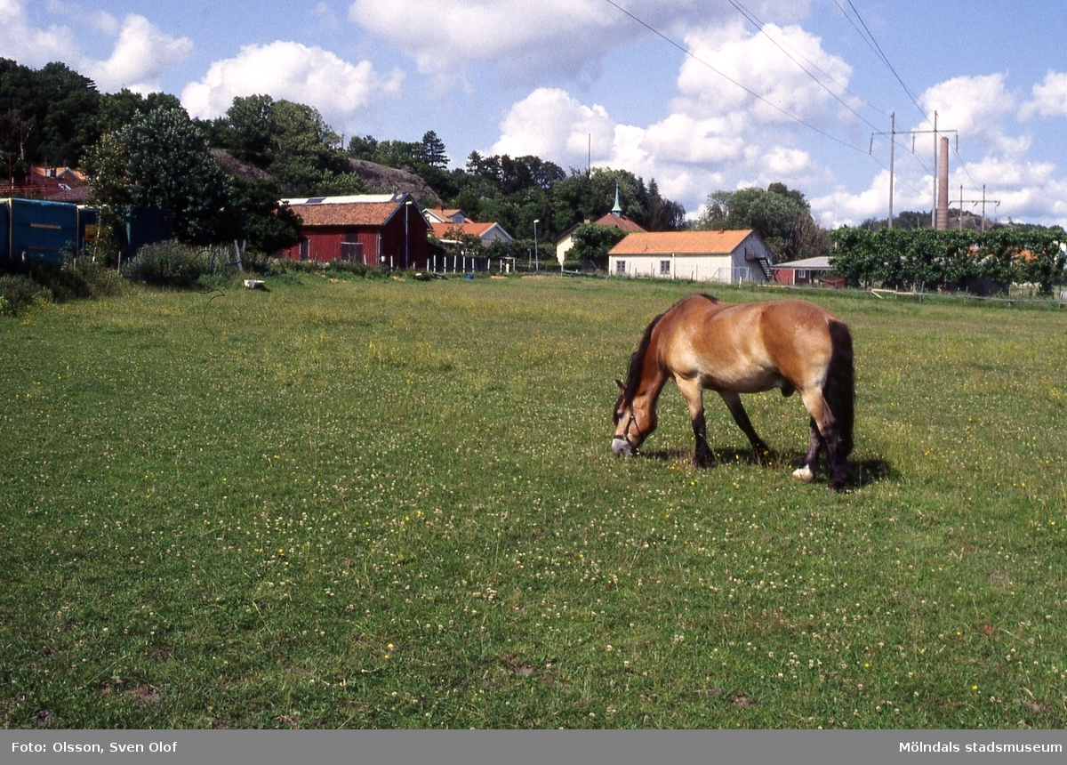 Gården Forsåker Storegård 2 i Forsåker, Mölndal, i juni 1995. Helge Larssons sista häst betar i hagen.