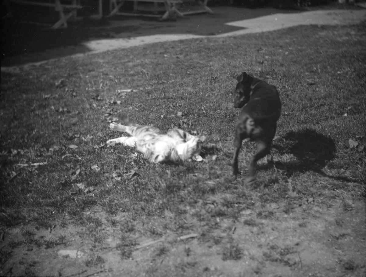 To hunder som leker