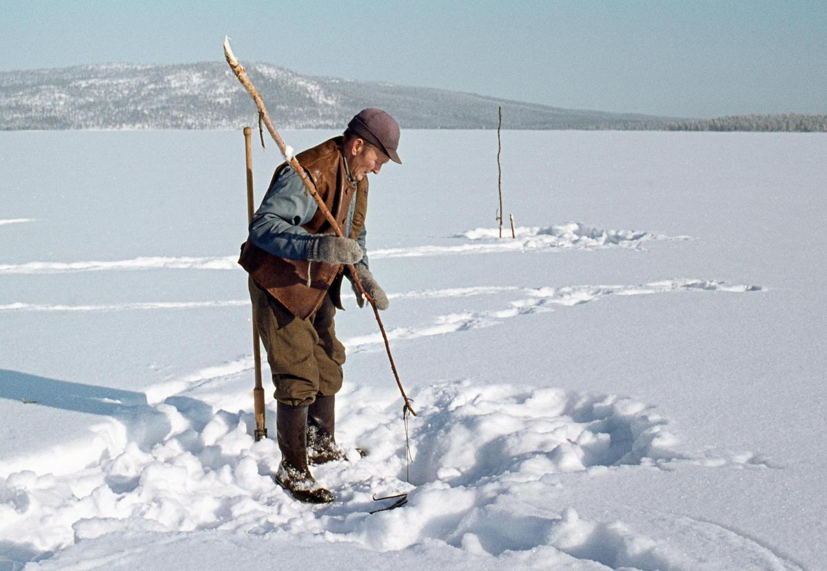 Åsmund Kolbu som fanger lake med fiskesaks på Isteren i Engerdal i 1977. (Foto/Photo)